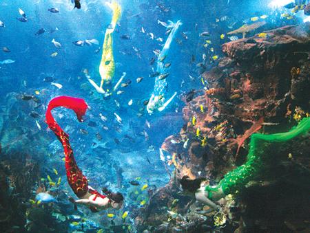 壁纸 海底 海底世界 海洋馆 水族馆 桌面 450_339